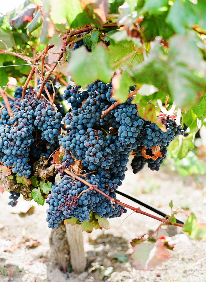 How will the Sonoma and Napa Fires Affect the 2017 wine vintage?