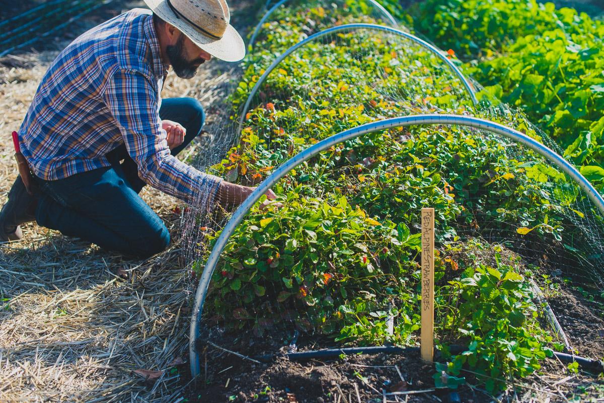Kendall-Jackson Culinary Gardener Tucker Taylor garden tour