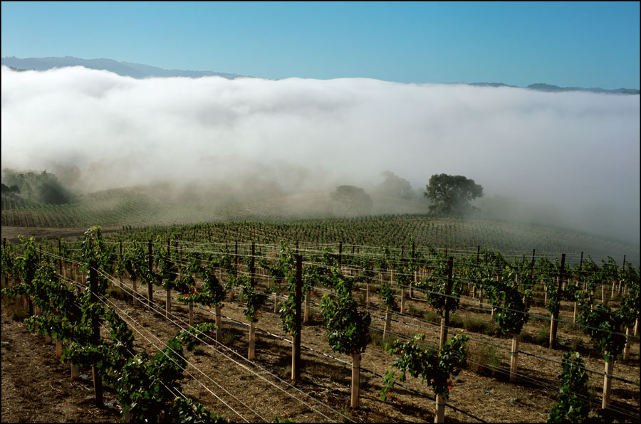 Outland Ridge above fog Anderson Valley Mendocino County