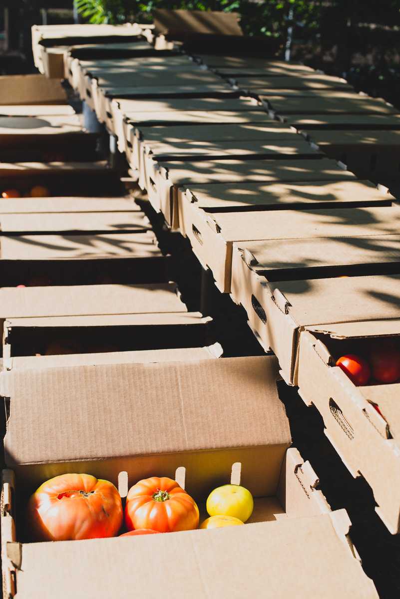 Summer is slowly coming to an end, which gets us excited because not only is harvest in full effect but also, our Annual Kendall-Jackson Heirloom Tomato Festival is fast approaching. So we thought, what better time to catch up with our culinary gardener to see how he's preparing for this monumental food and wine event. #KJTomFest
