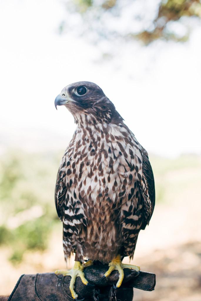 Kendall-Jackson Falcon
