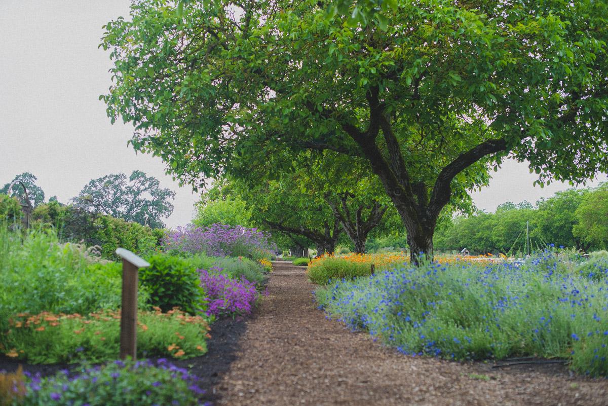 Kendall-Jackson Estate Gardens' Perennial Borders