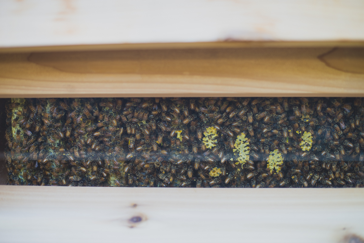 Demonstration beehive in the Kendall-Jackson gardens.