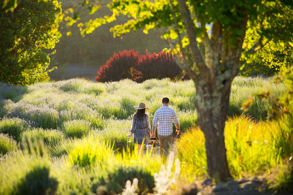 Sonoma County Picnic Spots Matanzas Creek Winery