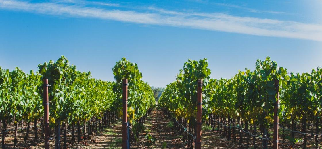 """It always seems like harvest comes before you know it. But come, it does, and no sooner are the grapes picked than everybody wants to know: """"How was the vintage?"""" We caught up with Kendall-Jackson's Winemaster, Randy Ullom, on Sept. 15, when harvest was about 40% complete."""