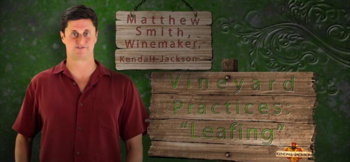 Leafing Video Hero