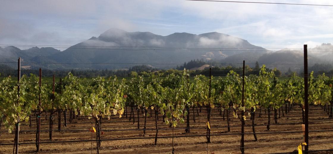 Harvest 9-22_Fog Knights Valley