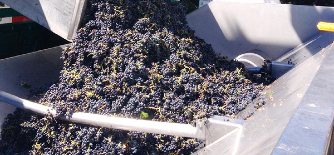 KJ_harvest_blog_090413_featured