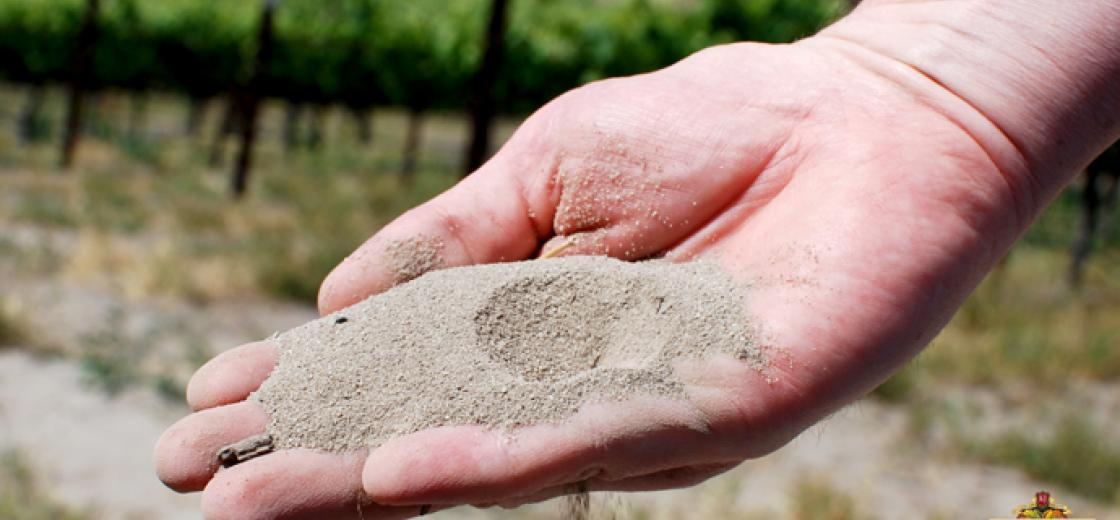 How different soils can impact a wine's profile?