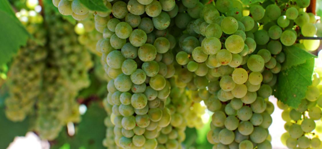 Kendall-Jackson, Harvest, Wine