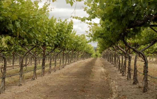 Wine Varietals — What to Expect in 2015