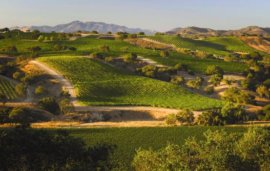 Open Space Los Alamos Vineyards