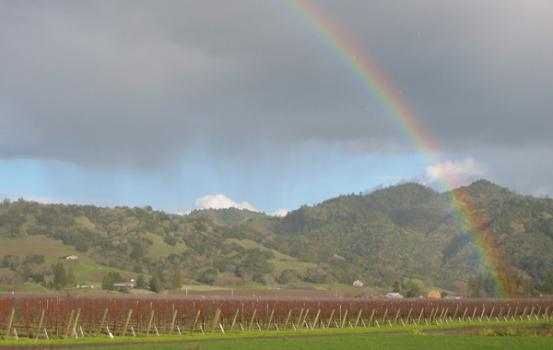 Vineyard Rainbow_2