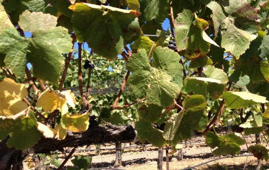 harvest update 9-10