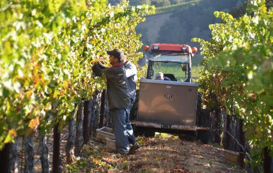 Harvest Cab_12