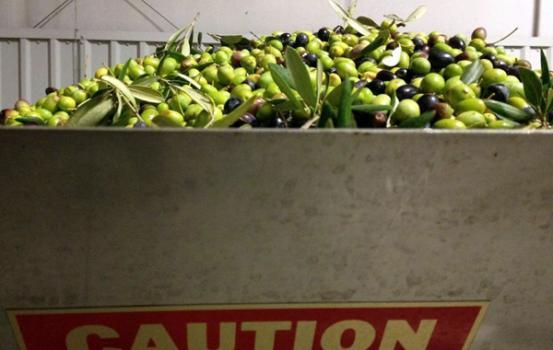 Olives_2012