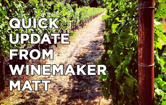 KJ_vineyard_update_070113