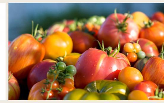 Kendall-Jackson Annual Tomato Plant Sale