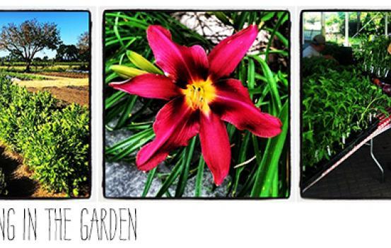 It's Spring at K-J Wine Estate & Gardens Updated
