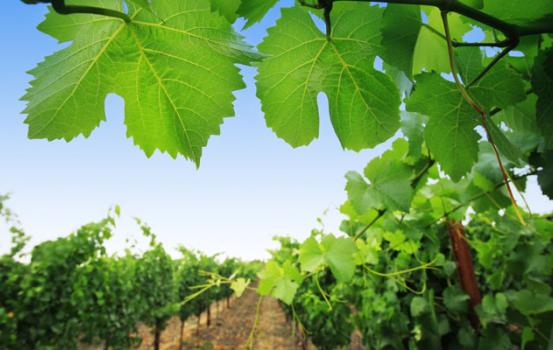 Why the American Viticultural Areas (AVA) system came into being