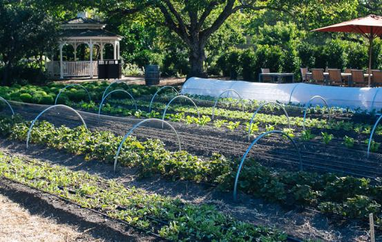 Master of Wine Christy Canterbury explores the diverse specialty produce grown at Kendall-Jackson's gardens and offers wine pairing suggestions.