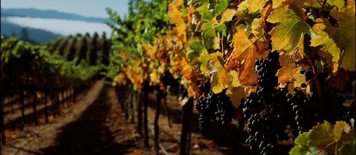 Kendall-Jackson Mendocino County Vineyard