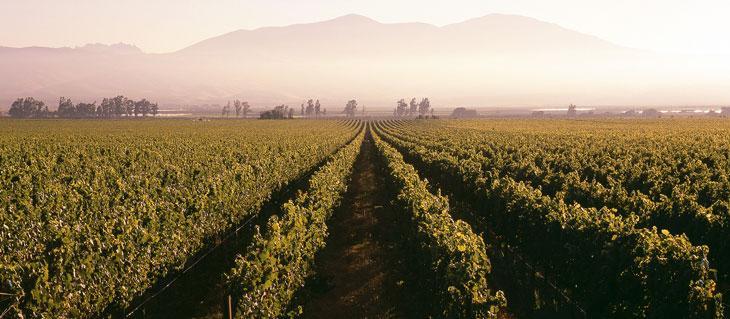 Kendall-Jackson Monterey County Vineyard