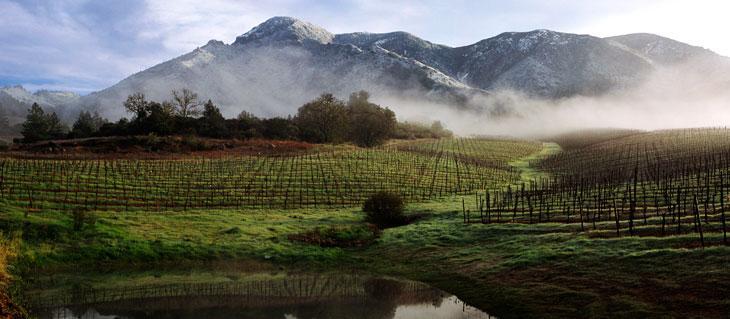 Kendall-Jackson Napa County Vineyard