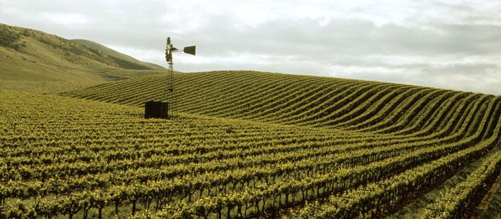 Kendall-Jackson Santa Barbara County Vineyard