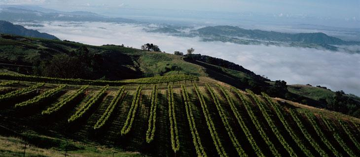 Kendall-Jackson Sonoma County Vineyard