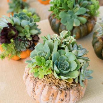 Kendall-Jackson Harvest Celebration Succulents