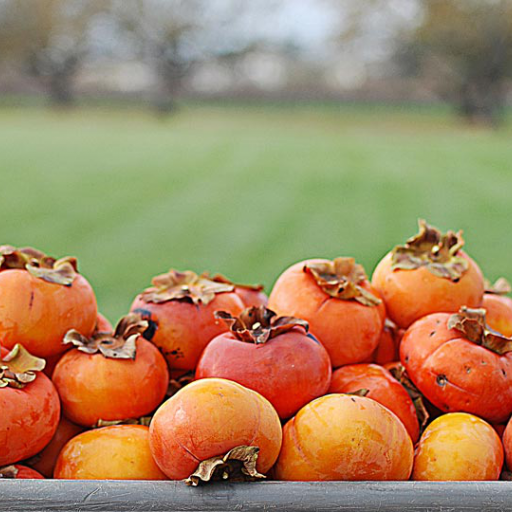 Fuyu Persimmon and Pomegranate Salad