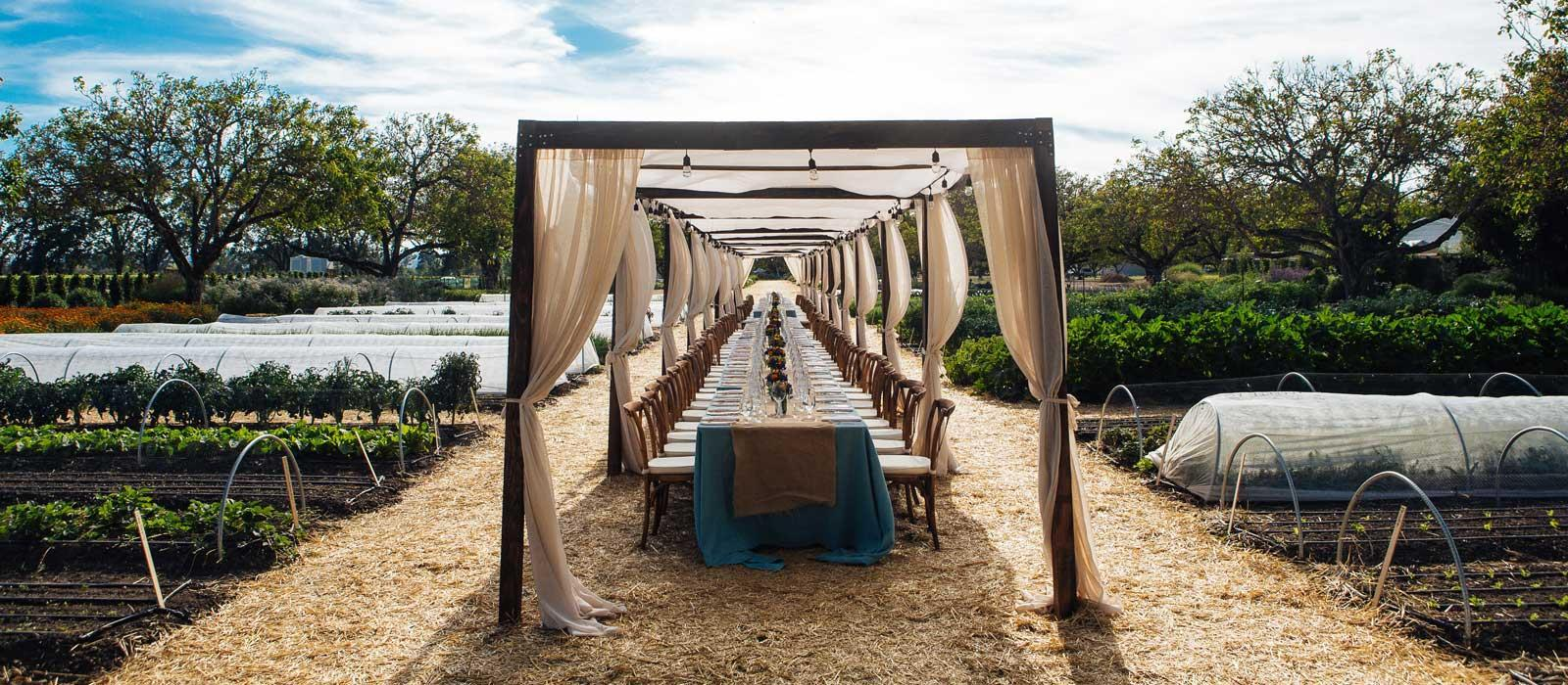 Join us once a month for our farm-to-table dinner series under the amphitheater of the Sonoma County night.