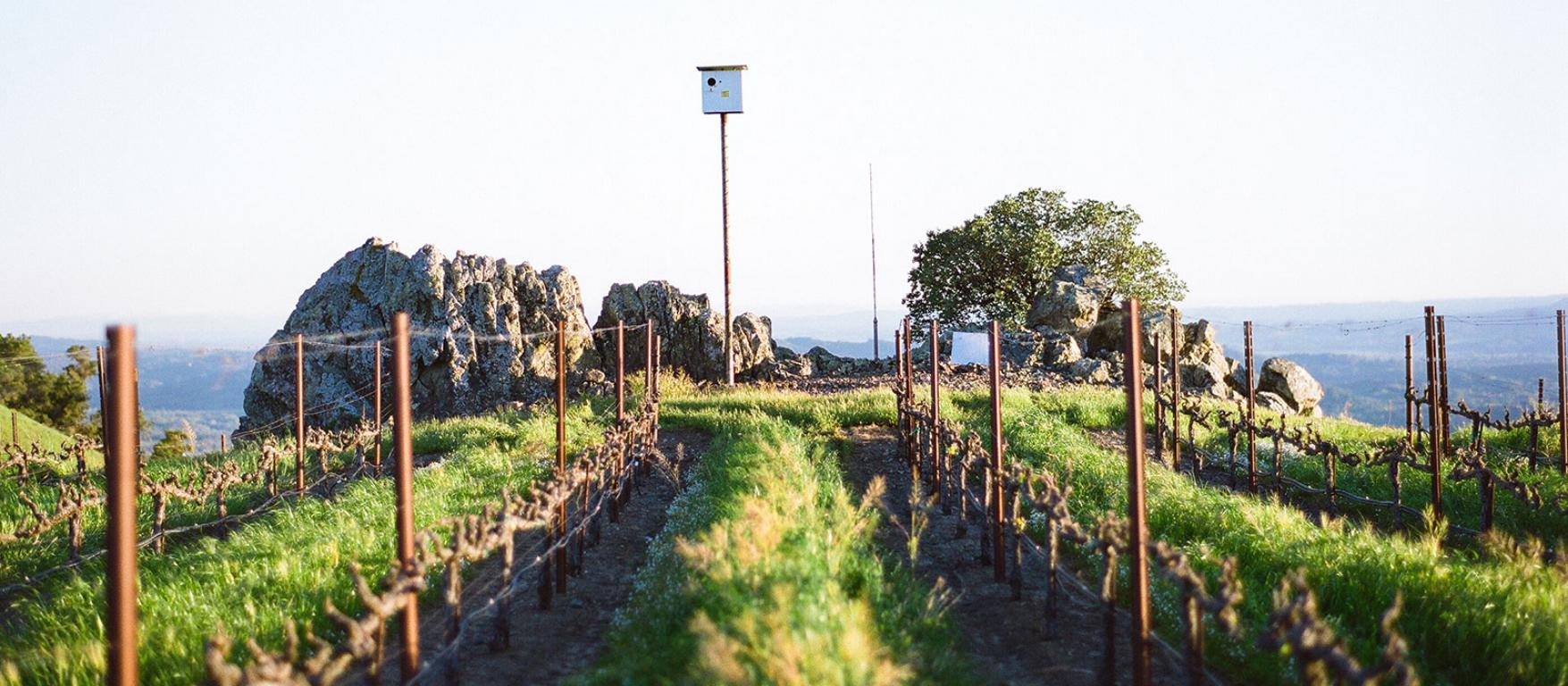 Sustainably farmed vineyards at Kendall-Jackson.